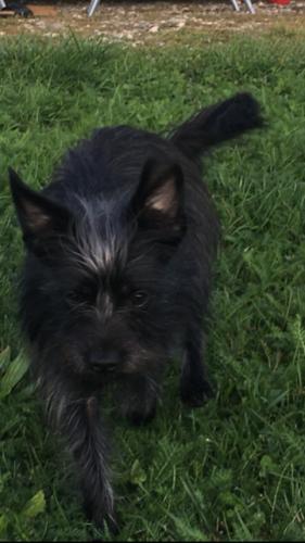 Haushund Pippa
